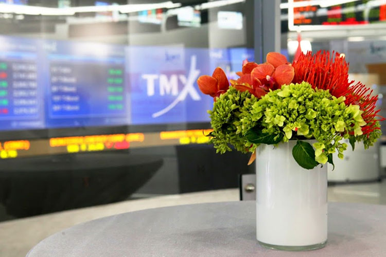 Flower in a pot in front of the TMX Broadcast Centre logo